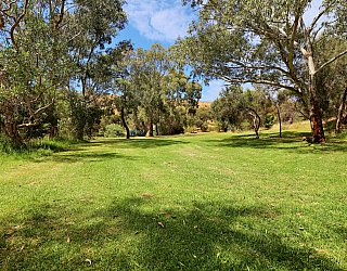 Cormorant Drive Reserve South Clearing 1