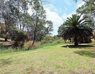 Cormorant Drive Reserve South Palm Tree 2