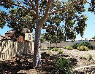 Audrey Street Reserve Playground Tree 1