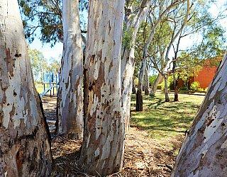 Cohen Court Reserve Trees 1