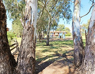 Cohen Court Reserve Trees 2