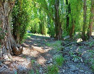 Christopher Grove Reserve Creek 2