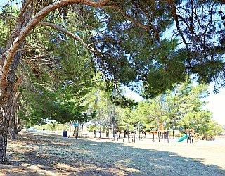 Olivier Terrace Reserve Tree 1