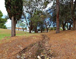 Central Avenue Reserve North 5