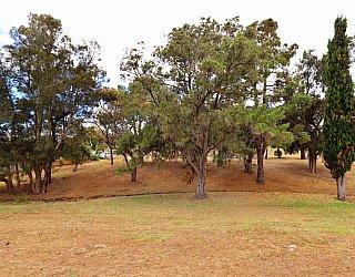 Central Avenue Reserve North 6