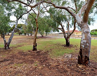 Central Avenue Reserve North 10