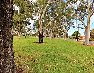 Hamilton Park Reserve Tree 2