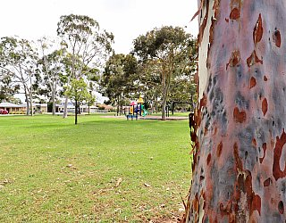 Hamilton Park Reserve Tree 3