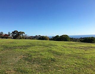 Roy Lander Reserve Grass 3