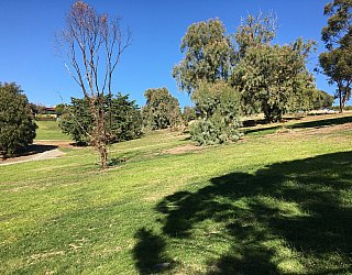 Roy Lander Reserve Grass 4