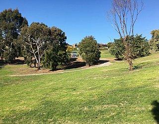 Roy Lander Reserve Grass 5