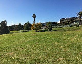Roy Lander Reserve Grass 8