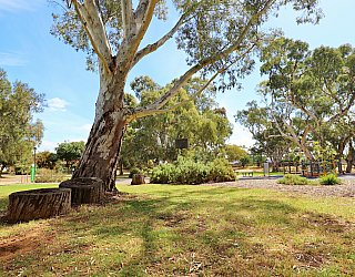 Maldon Avenue Reserve Tree 1