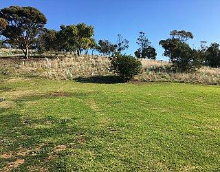 Roy Lander Reserve Grass 12