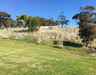 Roy Lander Reserve Grass 16