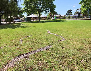 Trowbridge Avenue Reserve Exposed Roots 1