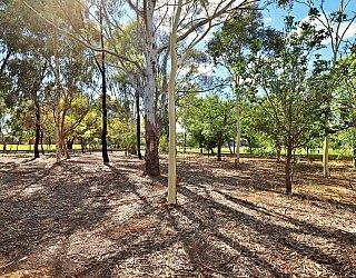 Alison Avenue Reserve Bushland 1