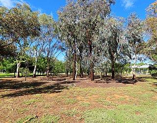 Alison Avenue Reserve Bushland 2