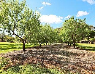 Alison Avenue Reserve Grove 2