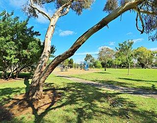 Alison Avenue Reserve Tree 2