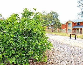 Branksome Terrace Reserve Orchard Citrus 2