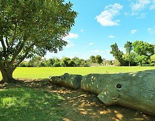 George Street Reserve Logs 1