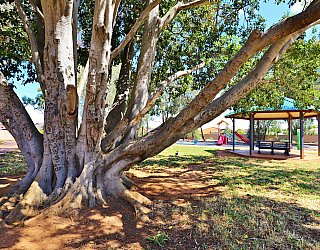 Graham Watts Reserve Tree 1