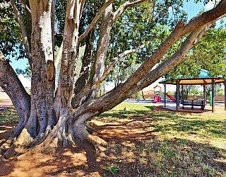 Graham Watts Reserve Tree 1
