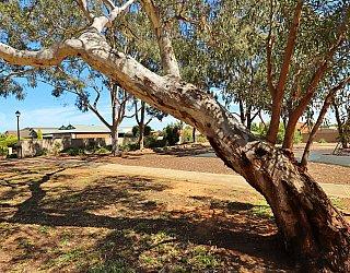 Graham Watts Reserve Tree 3