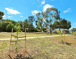 Myer Road Reserve Trees 1