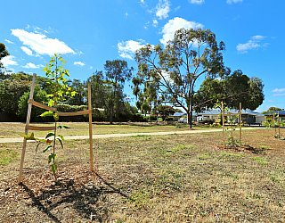 Myer Road Reserve Trees 2