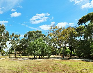 Myer Road Reserve Trees 4