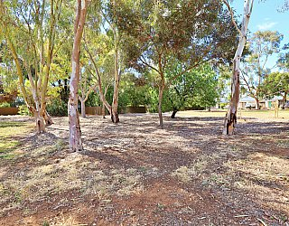 Myer Road Reserve Trees 5