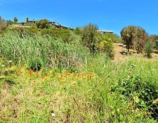 Lucretia Way Reserve 11