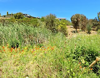 Lucretia Way Reserve 12