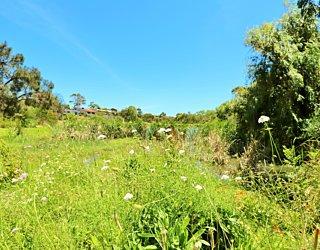 Lucretia Way Reserve 13