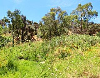 Lucretia Way Reserve 16