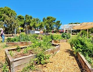 Newland Avenue Reserve Marino Community Garden 2
