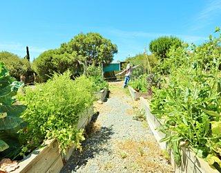 Newland Avenue Reserve Marino Community Garden 4