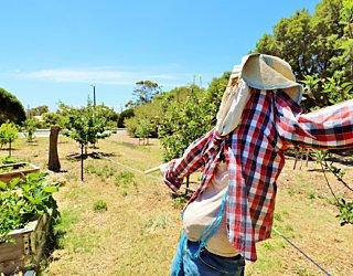 Newland Avenue Reserve Marino Community Garden Scarecrow 2