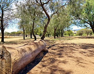 Reserve Street Reserve Dog Park 2