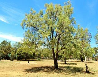 Reserve Street Reserve Dog Park 6