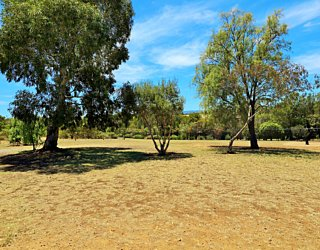 Reserve Street Reserve Dog Park 7