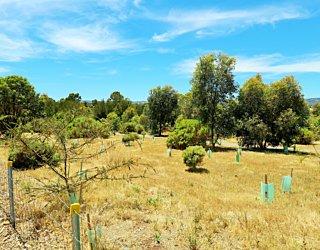 Reserve Street Reserve Dog Park Biodiversity Area 1