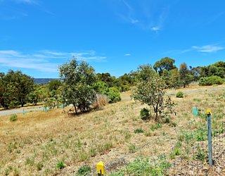 Reserve Street Reserve Dog Park Biodiversity Area 2
