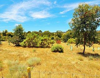 Reserve Street Reserve Dog Park Biodiversity Area 4