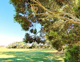 Marion Oval Western Field Cricket 5
