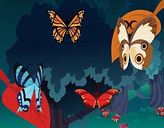 Biba Butterfly Bounty How To Play 23