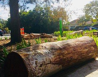 Breakout Creek Reserve Nature Logs