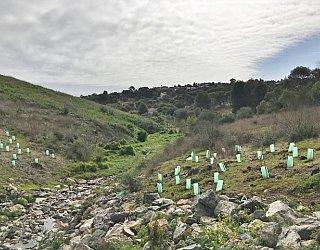 Glade Crescent Reserve Image 37